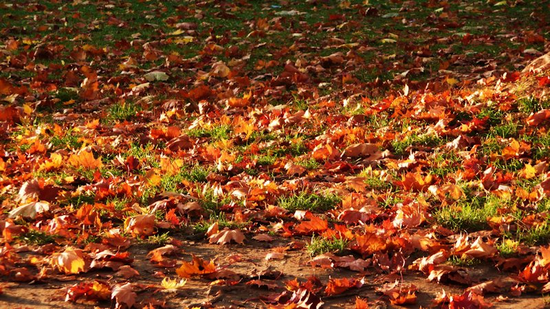 10 Fall Time Maintenance Tips for the Home